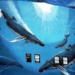 """Meksyk: gra """"Niebeski wieloryb"""" została potępiona"""